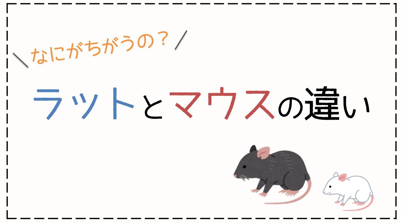 ラットとマウスの違い