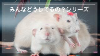 【飼育疑問】みんなどうしてるのシリーズ!