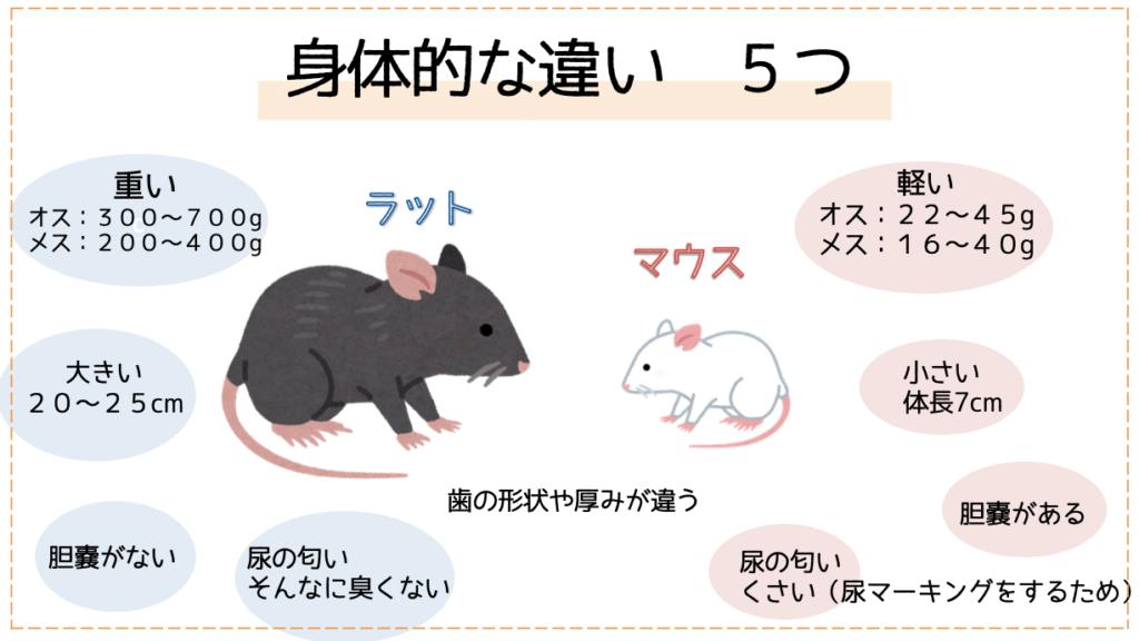 マウス ラット 違い マウスとラットはどのように違うのですか?